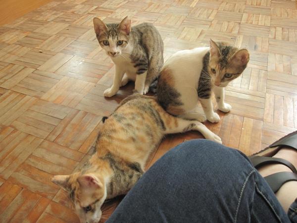 圍過來的3隻小貓
