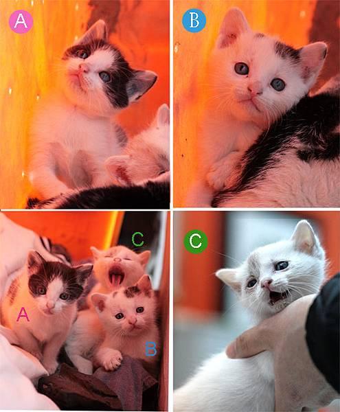 a母貓2.jpg