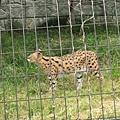 多摩動物園 005.jpg