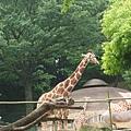 多摩動物園 045.jpg