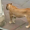 多摩動物園 048.jpg