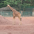 多摩動物園 054.jpg
