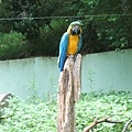 多摩動物園 068.jpg