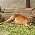 多摩動物園 069.jpg