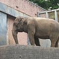 多摩動物園 113.jpg