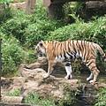 多摩動物園 117.jpg
