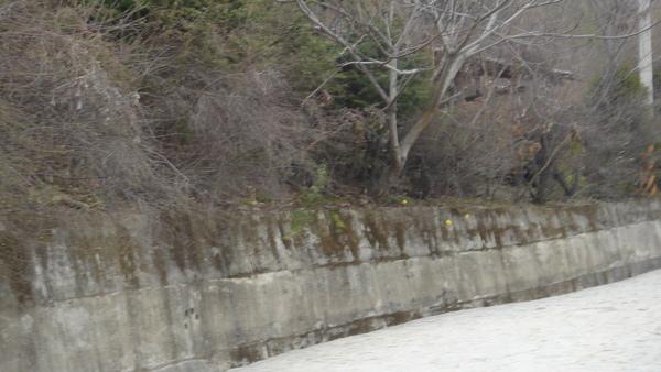 照片2009年1月22日 145.jpg