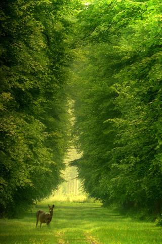Cool Nature .jpg