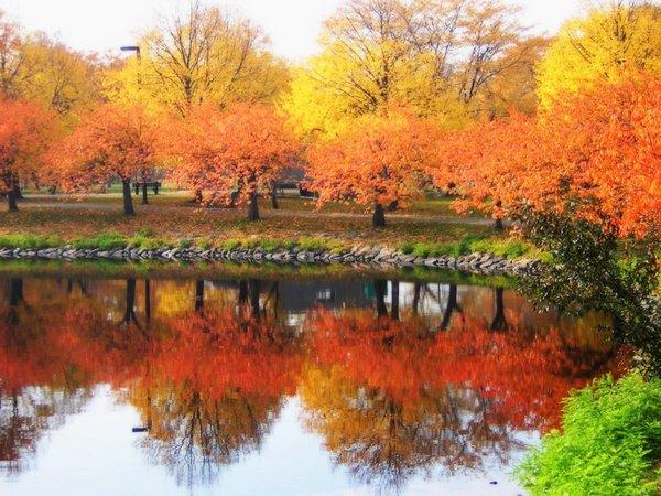波士頓的楓葉.jpg