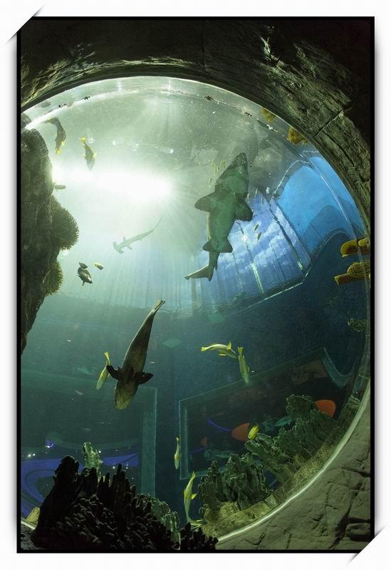 海洋公園(Ocean Park)74