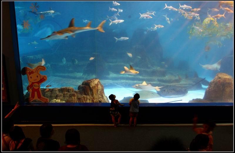 遠雄海洋公園29