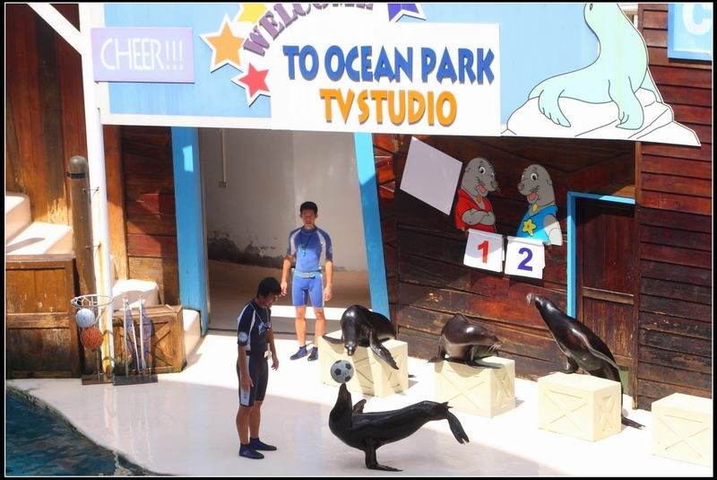 遠雄海洋公園37