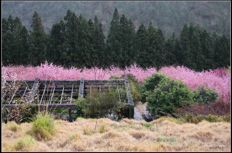 武陵農場20