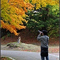 大沼国定公園(Ōnuma Quasi-National Park)11