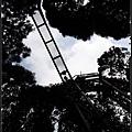 溪頭自然教育園區06