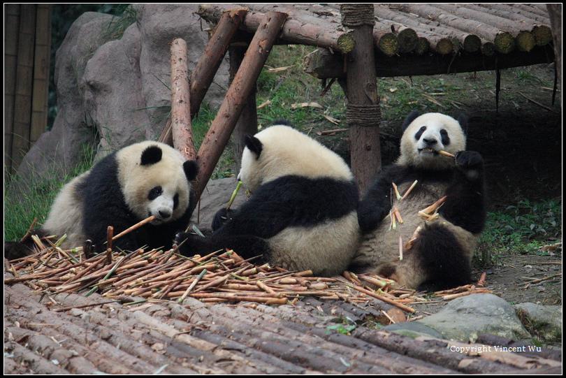 成都大熊貓繁育研究基地(CHENGOU RESEARCH BASE OF GIANT PANDA BREE)06
