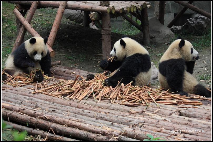 成都大熊貓繁育研究基地(CHENGOU RESEARCH BASE OF GIANT PANDA BREE)07