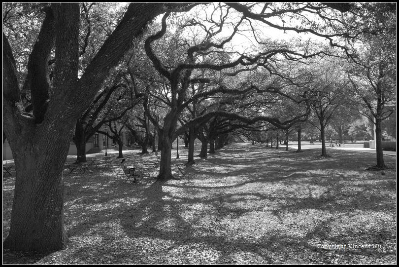 萊斯大學(Rice University)05