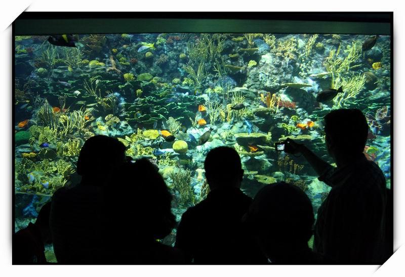 海洋公園(Ocean Park)66
