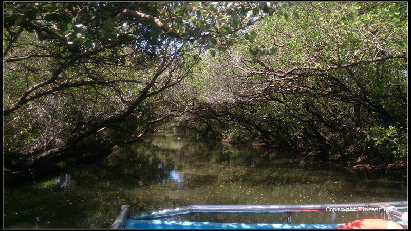 四草紅樹林綠色隧道05