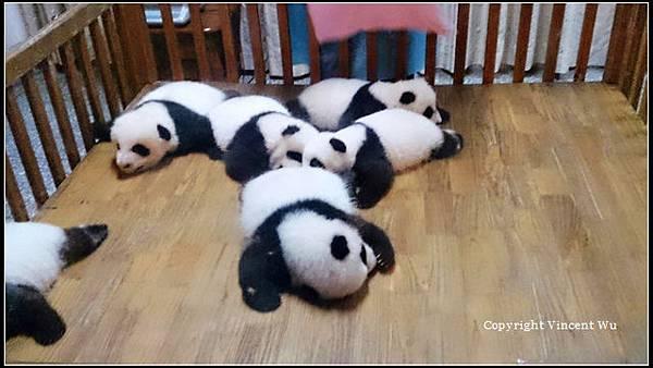 成都大熊貓繁育研究基地(CHENGOU RESEARCH BASE OF GIANT PANDA BREE)04