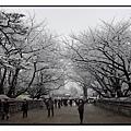 名古屋城(Nagoya Castle)30