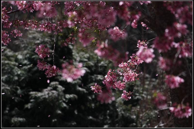 武陵農場35
