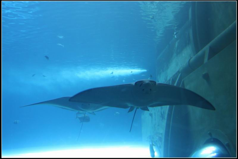 國立海洋生物博物館03