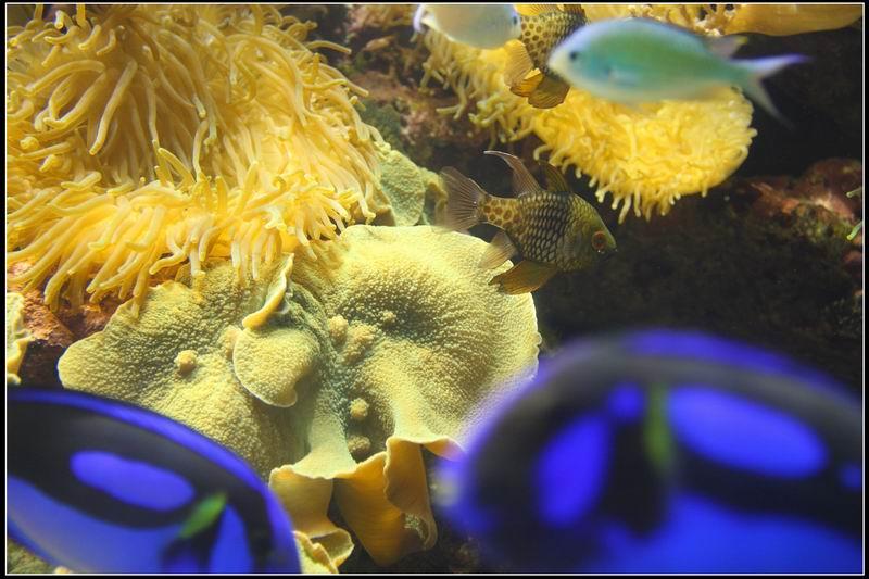 國立海洋生物博物館19
