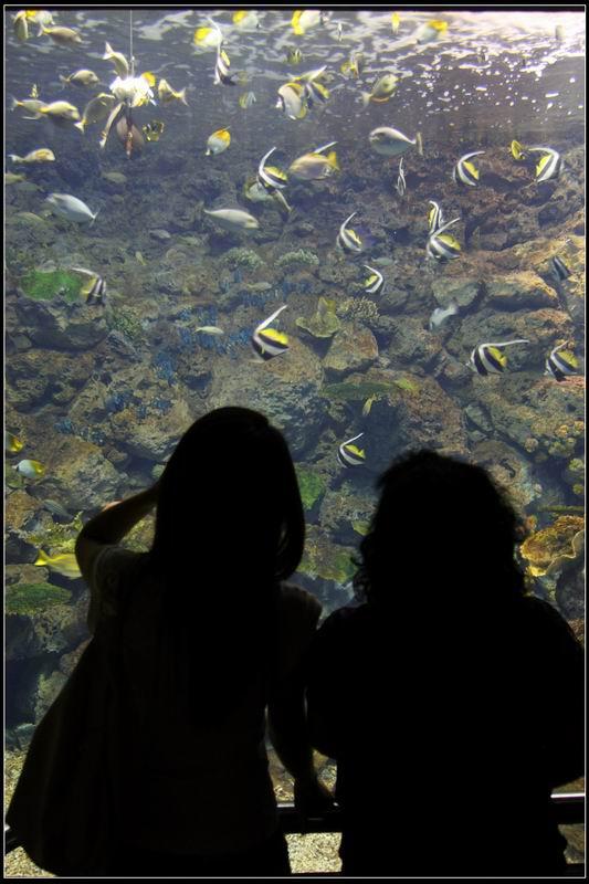國立海洋生物博物館21