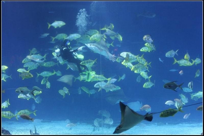 國立海洋生物博物館25