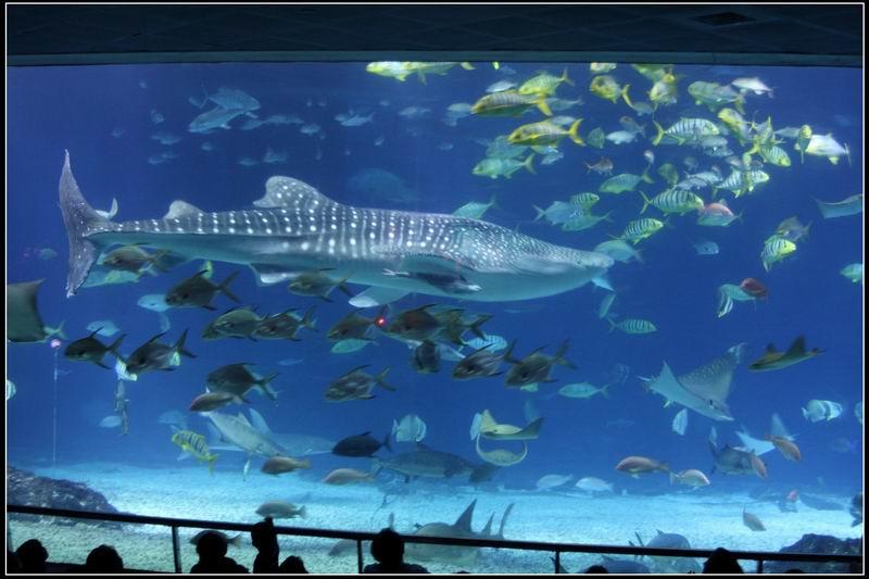 國立海洋生物博物館26