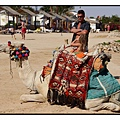 胡爾加達(Hurghada)Harmony Makadi Bay Hotel & Resort24