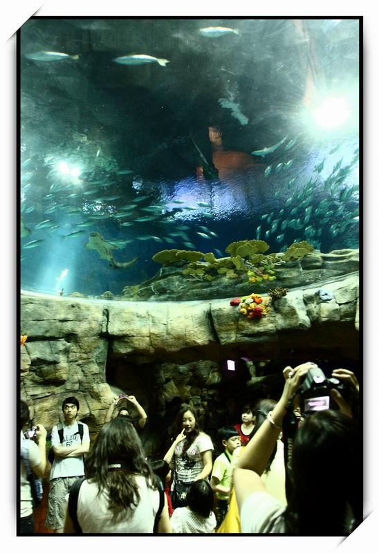 海洋公園(Ocean Park)69
