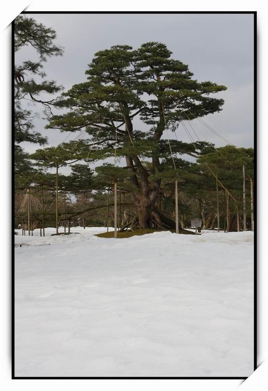 兼六園(Kenroku-en)22
