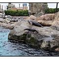 海洋公園(Ocean Park)25
