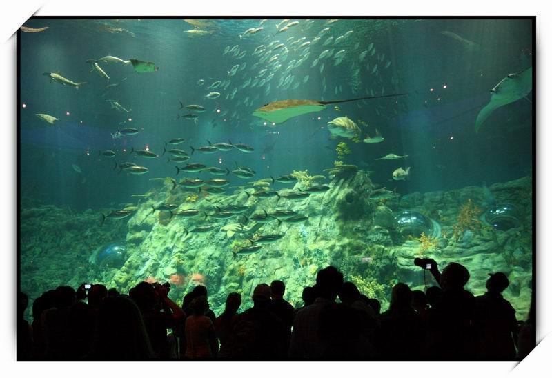 海洋公園(Ocean Park)70