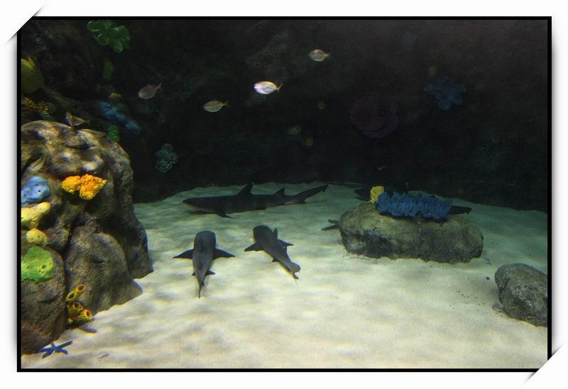 海洋公園(Ocean Park)64
