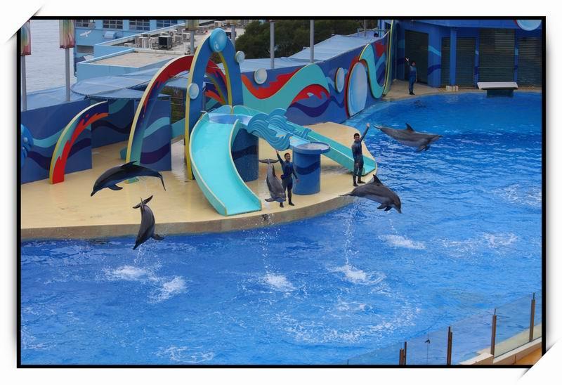 海洋公園(Ocean Park)53