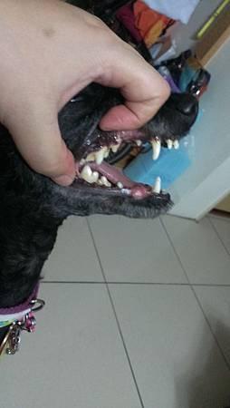 試吃前第一天的牙齒狀況.jpg