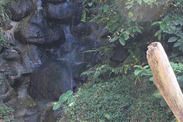 南投紫林莊照片集 1290.jpg