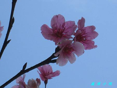 IMG_6294.jpg