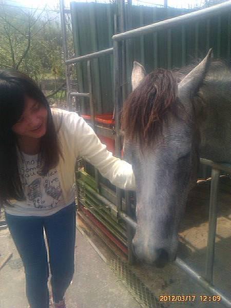農場最可愛的馬兒-Gigi