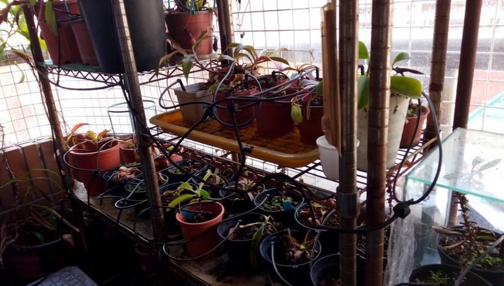Drip Irrigation_Nepenthes_9.jpg