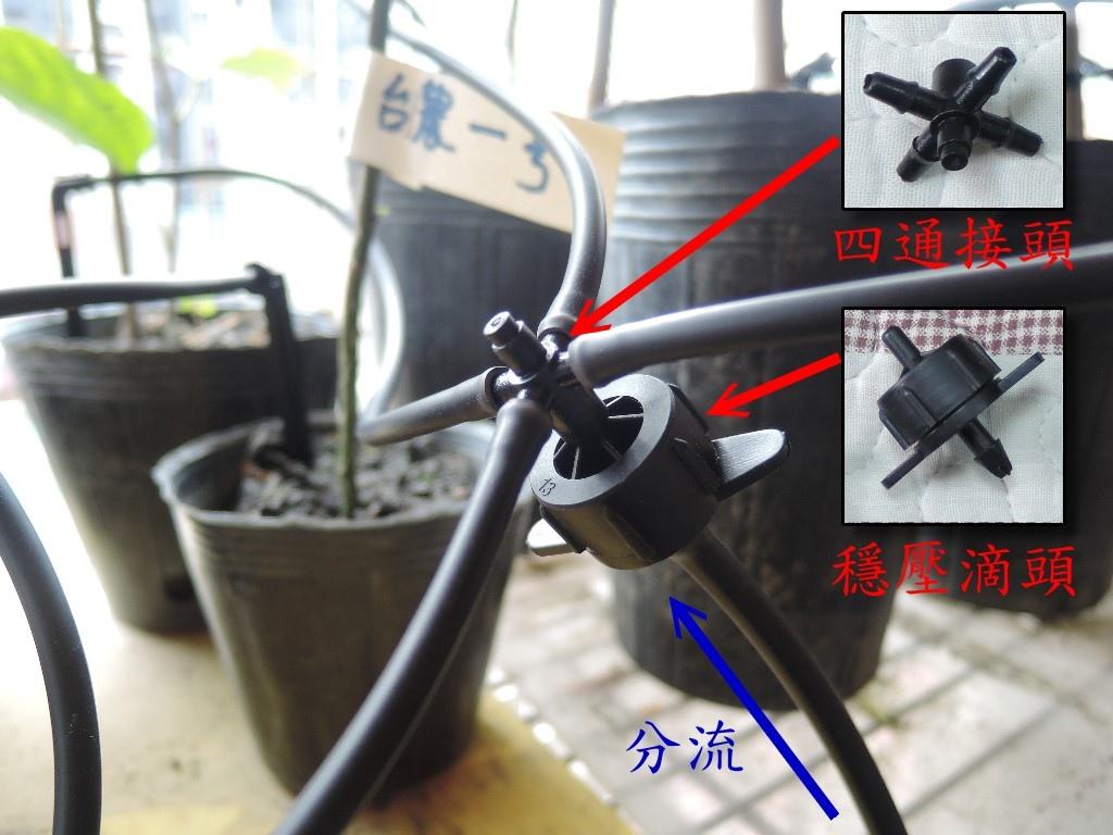 Drip Irrigation_Nepenthes_5.jpg