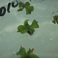 In Vitro Nep Seed Germination_9.jpg