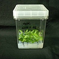 In Vitro Nep Seed Germination_10.jpg