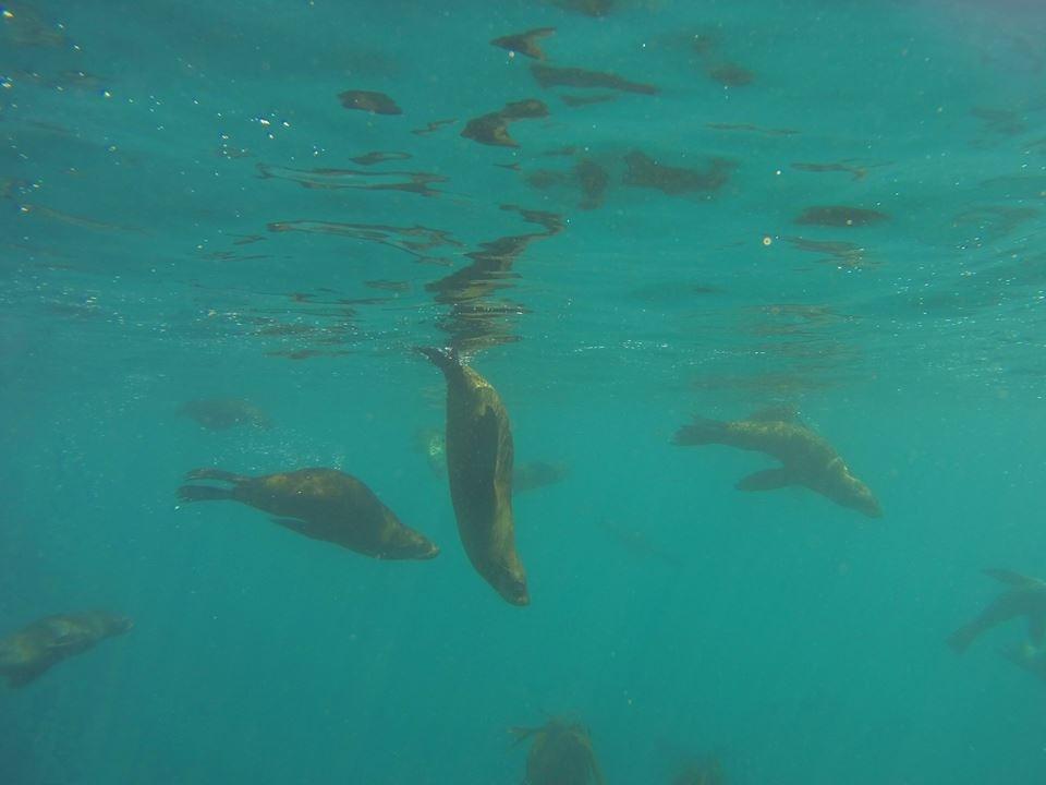 海豹浮潛_4.jpg