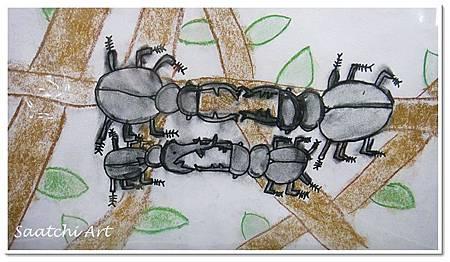 甲蟲 (2)