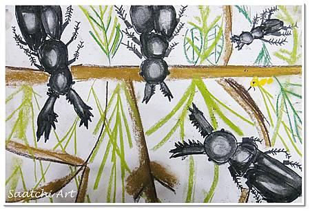 甲蟲 (18)